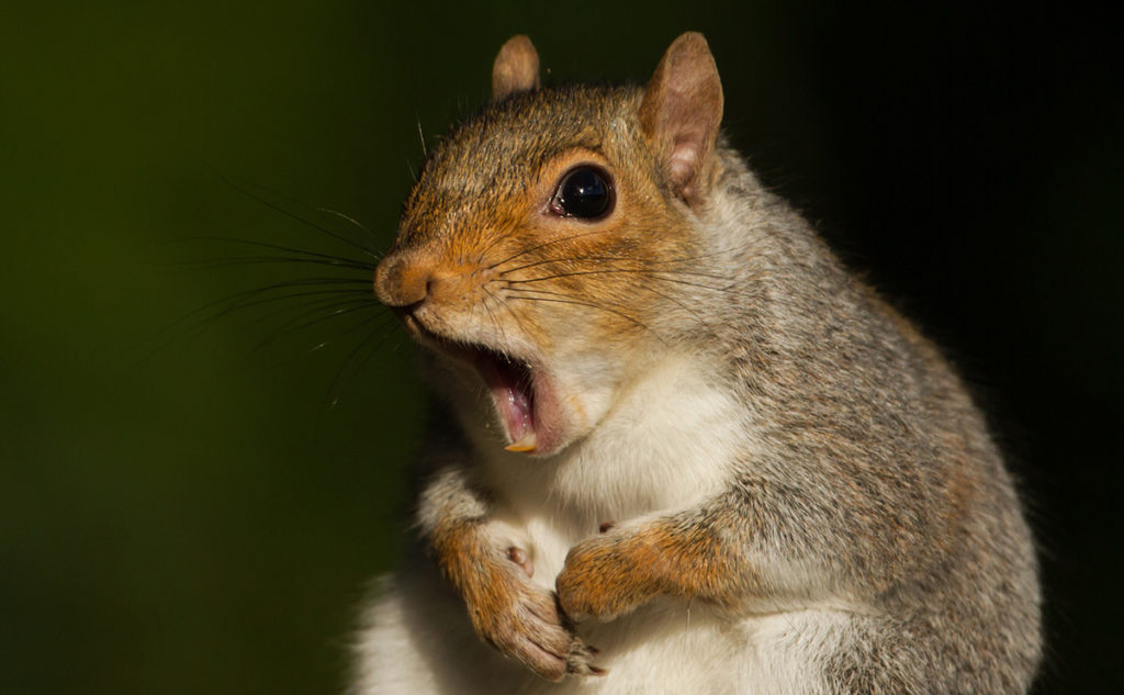 More coming soon.  But  until then, please enjoy this astonished squirrel.
